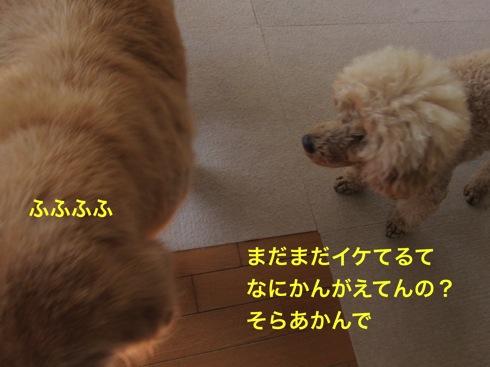 th_IMG_6623-1.jpg