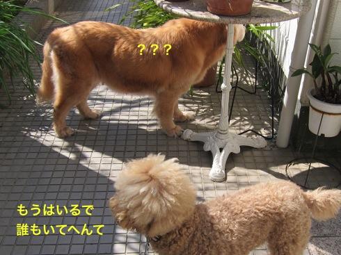 th_IMG_6635-1.jpg