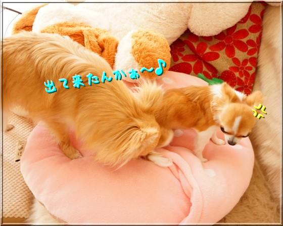 063_20120429162536.jpg