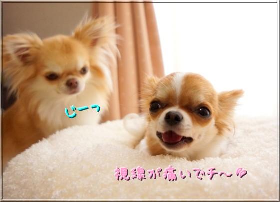 146_20120502221051.jpg
