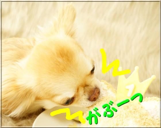 DSC00305_20111214233838.jpg