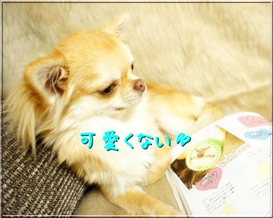 DSC01377_20111226210112.jpg