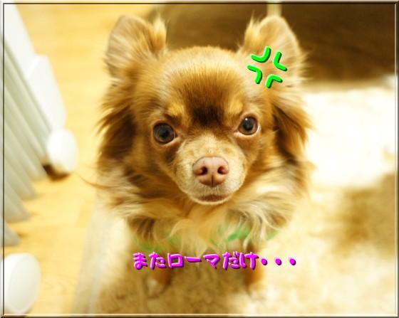 DSC01388_20111226210112.jpg