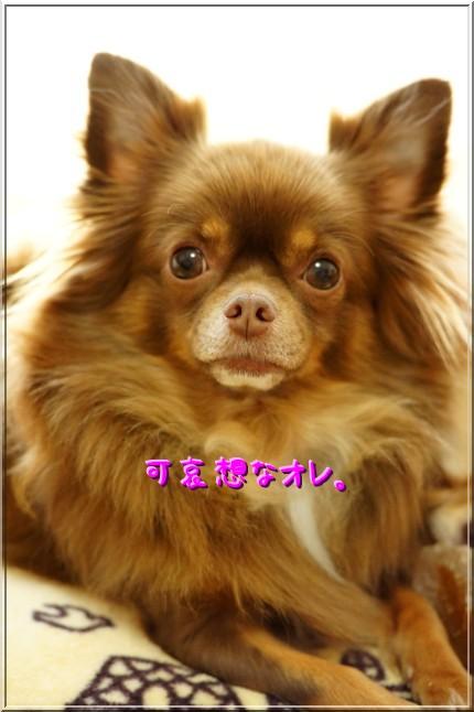 DSC04038_20111007201800.jpg