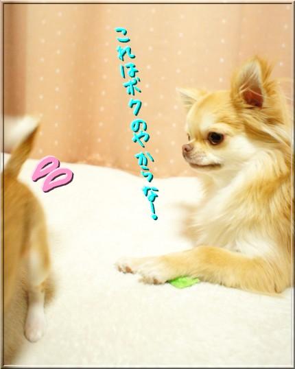 DSC07185_20120220010800.jpg