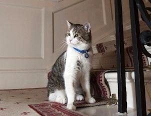 キャメロンの猫