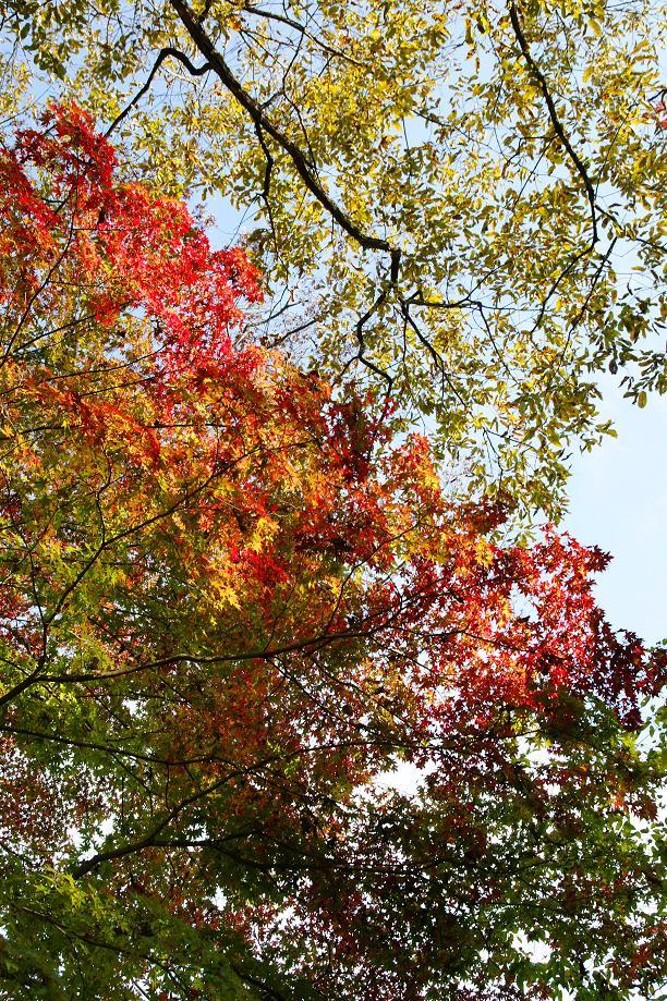 秋への準備