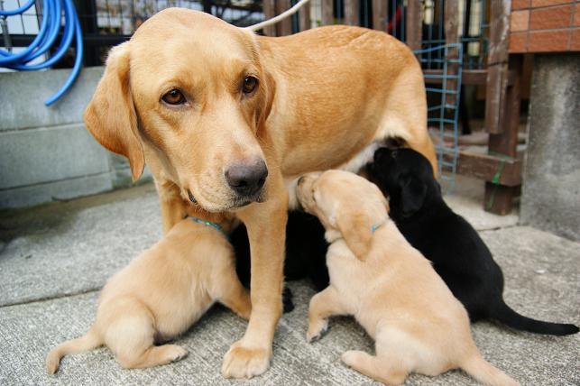 まだママのおっぱいが大好きです