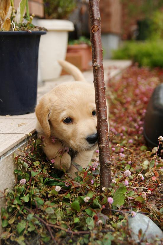 花壇を探検!