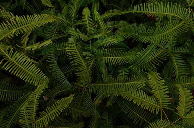9シダの森