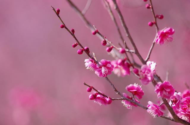 4春~甘い香りとともに~