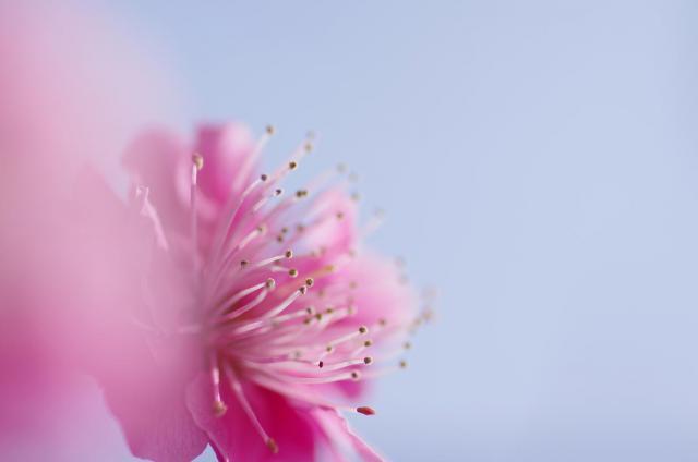 5柔~ピンク色の花びら~