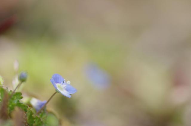 9静~春の足音~
