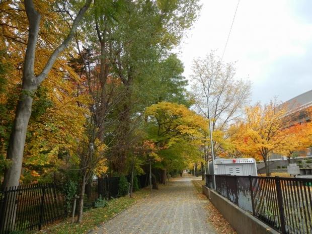 豊平公園界隈 (3)