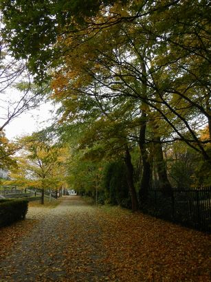 豊平公園界隈 (14)