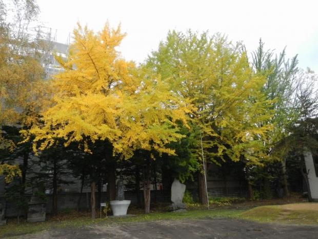 ロジェ豊平公園界隈 (7)