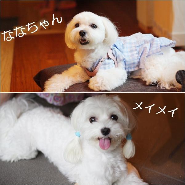 cats_20110903130823.jpg