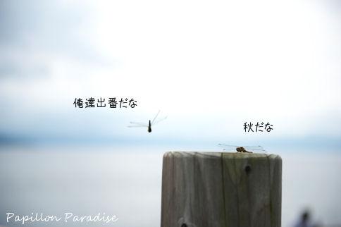2011081818.jpg