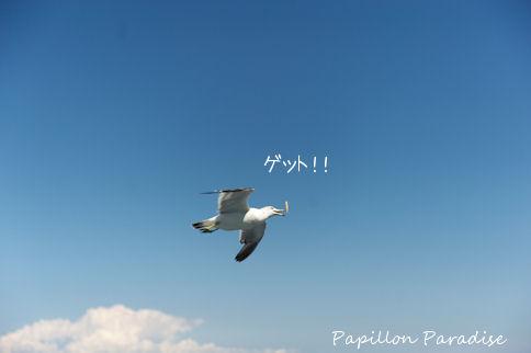 2011081923.jpg