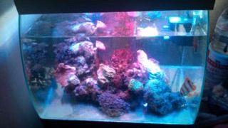 アカ、RGB、ブルー、蛍光灯白