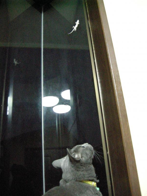 夜の訪問者ー1