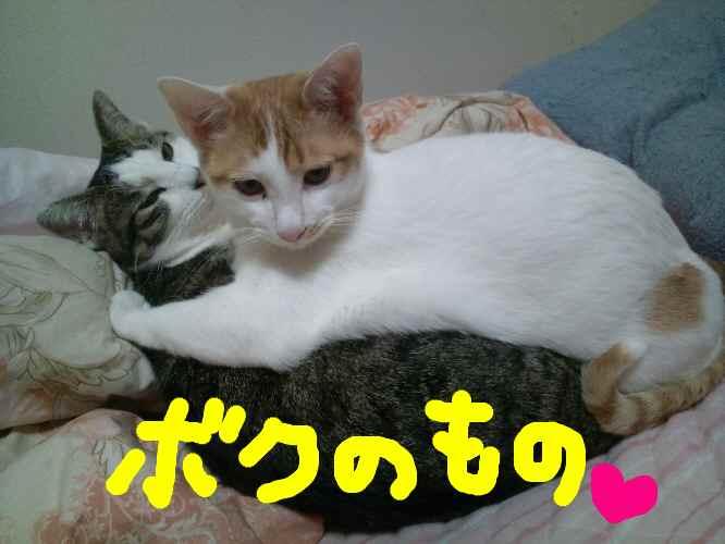 2011_0303_234835-F1001850.jpg
