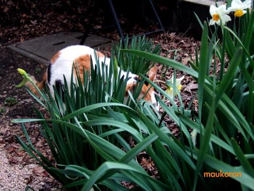 まぼろしのネコ