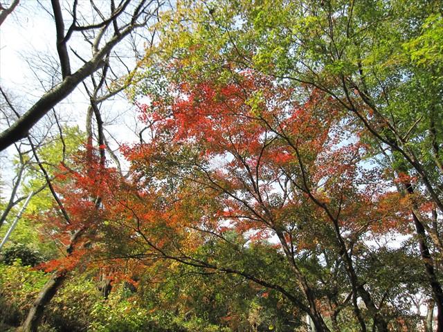 紅葉を眺めながら突っ走る~