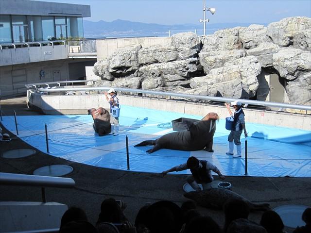 海獣ショー