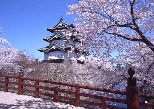 sakura-p1.jpg