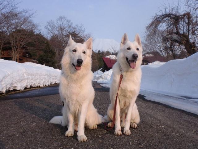 アブーとレオン2011-2-08