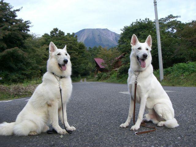 アブーとレオン大山2008.09.28