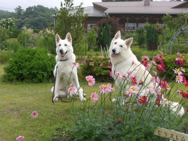 大山  左)レオン&右)アブー2009年06月07日