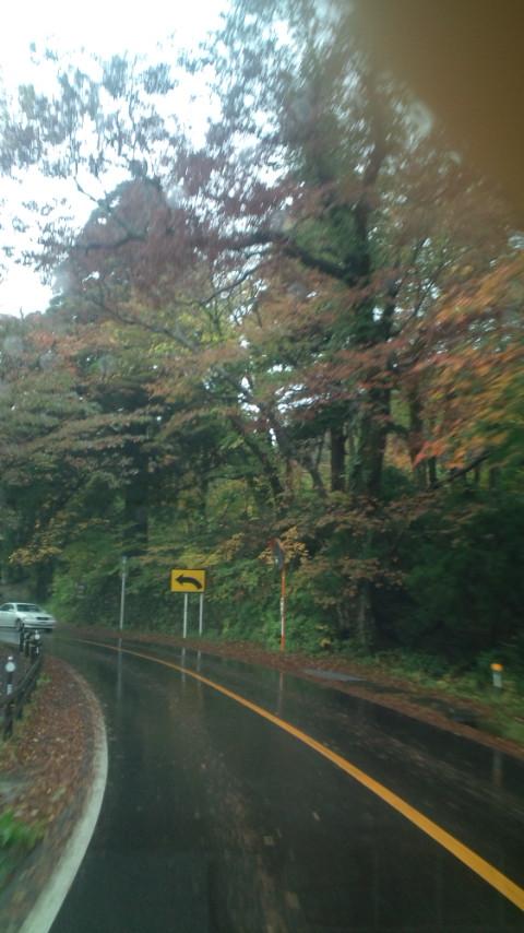 雨でも紅葉は綺麗