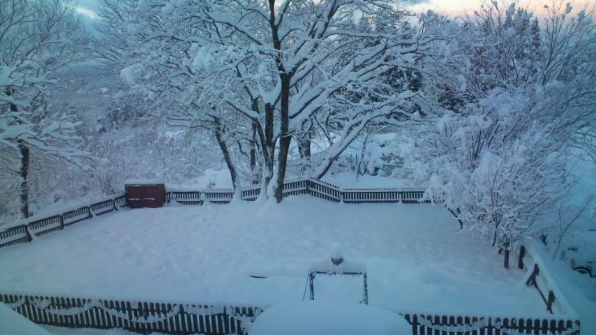 ドッグランが雪で埋まっています