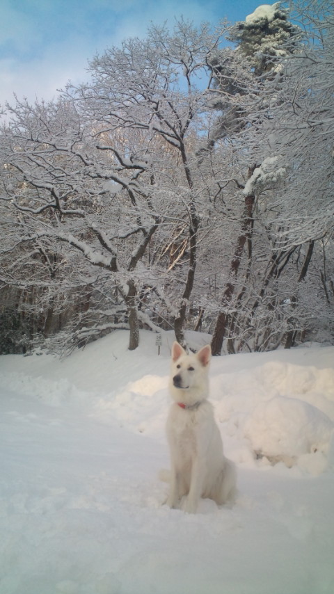 リサ:雪は大好きなの