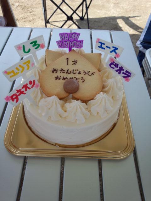1歳のバースデーケーキ(犬用)