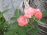 オレンジマザーズデイ・2007/9