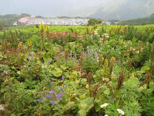 6 お花畑