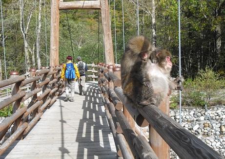 10 明神・明神橋の野生猿