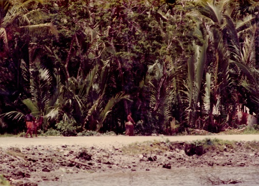 22 島民のジャンクルの生活