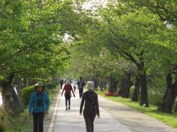 散歩の人たち