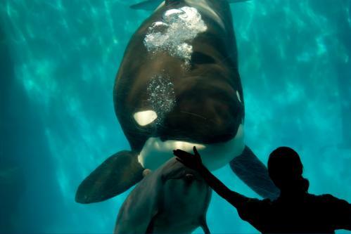orca-2.jpg