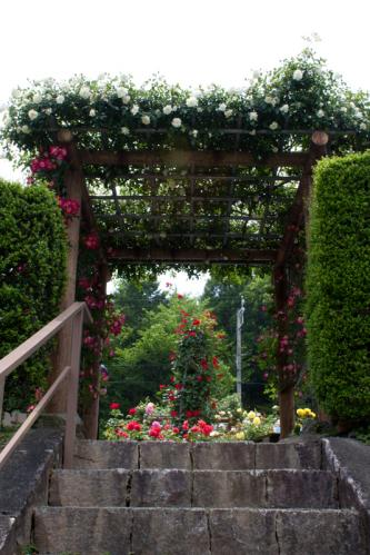 rose_20111209085516.jpg