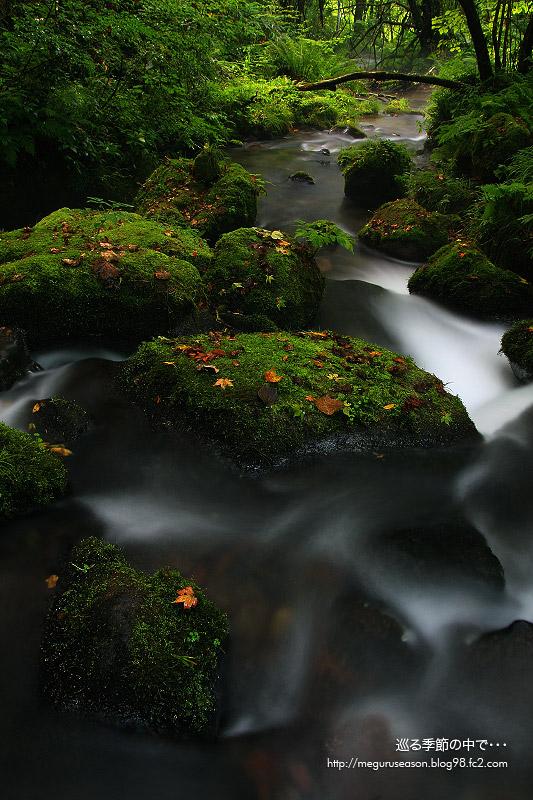 初夏の木谷沢渓谷 奥大山