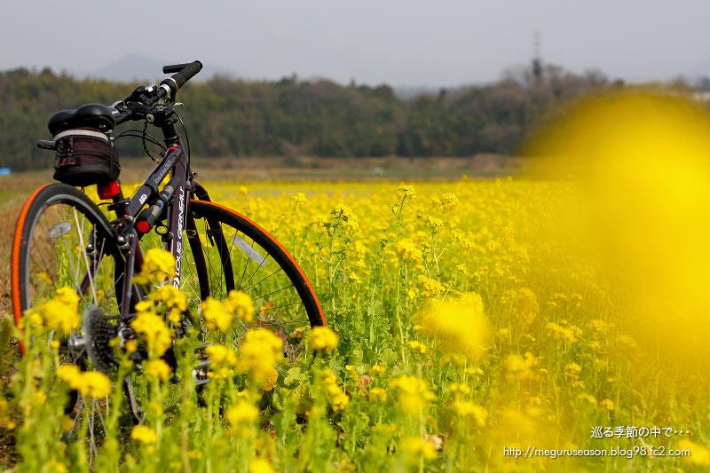 自転車 ポタリング