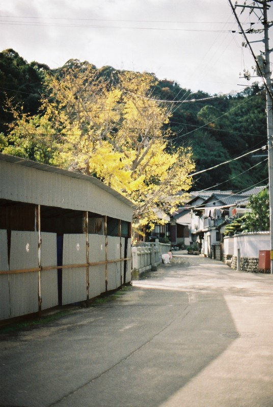 しまじかん。。岡村島