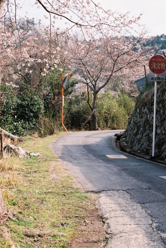 春山への道