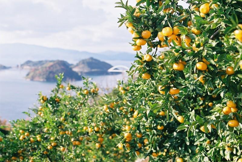 蜜柑と海と空と・・・