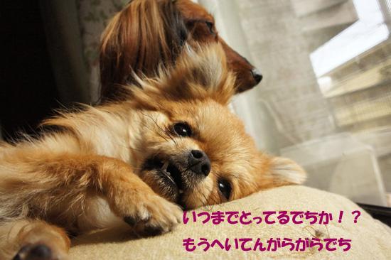 DSC09011_2.jpg